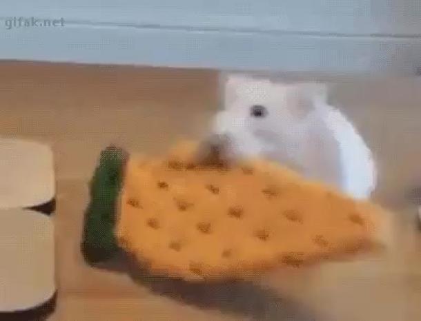 Гиф картинка как едят животные